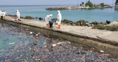 KNPI Pulau Seribu Minta Bupati Tanggap Masalah Limbah Oil yang Mencemarkan Pulau Seribu
